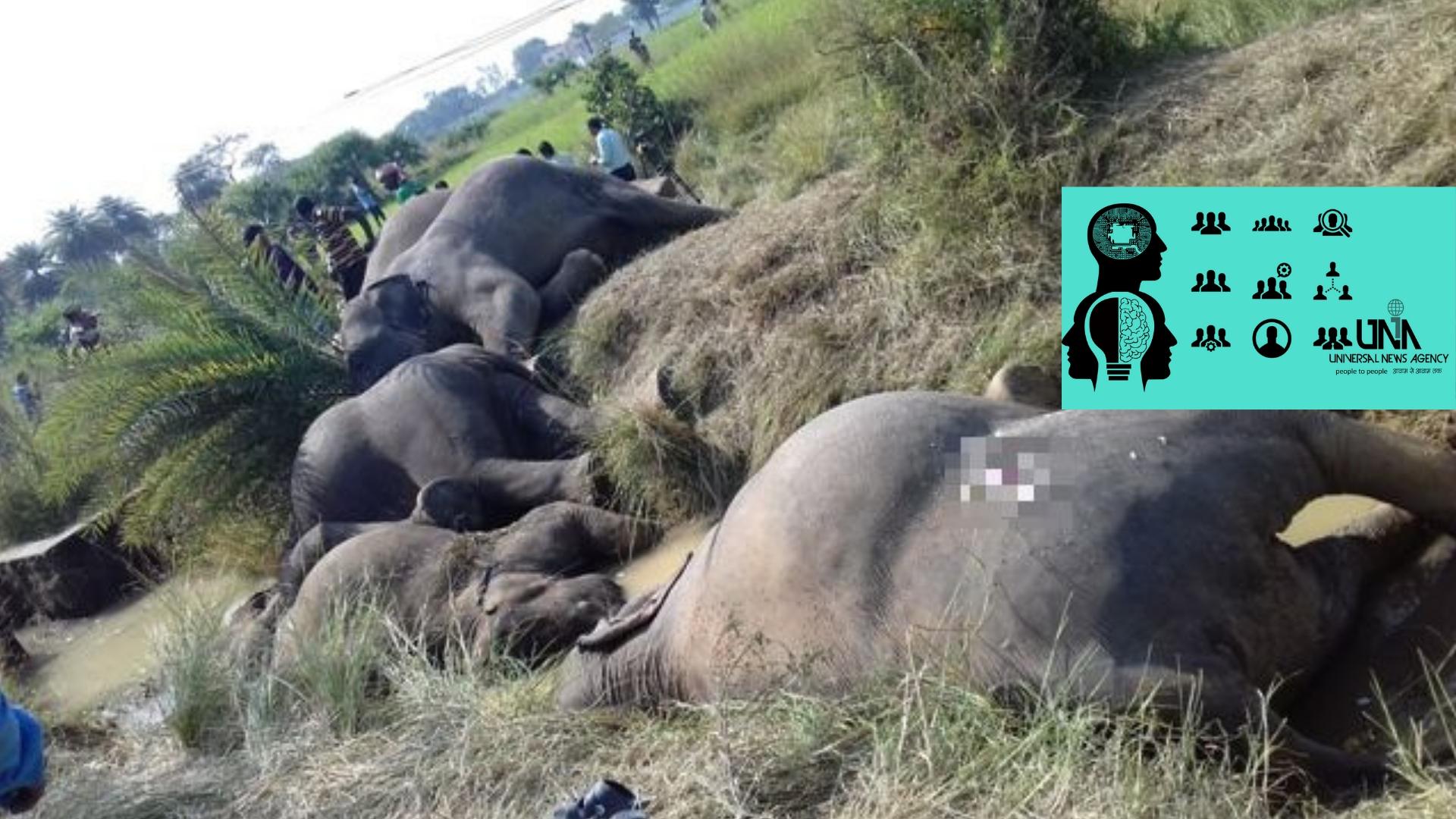 ओडिशा के मुख्यमंत्री ने ढेंकनाल में 7 हाथियों के विद्युत प्रक्षेपण की जांच का आदेश दिया
