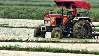 पटना-खेतों में मर रहे बिचड़ों को बारिश से मिली संजीवनी